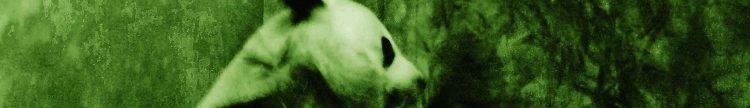 Fuzzy Panda Recording Company